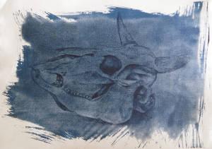 Cyanotype: Skull