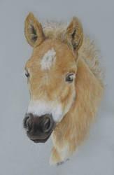 One little foal by Sefja
