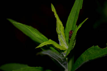 Just some bug on a leaf