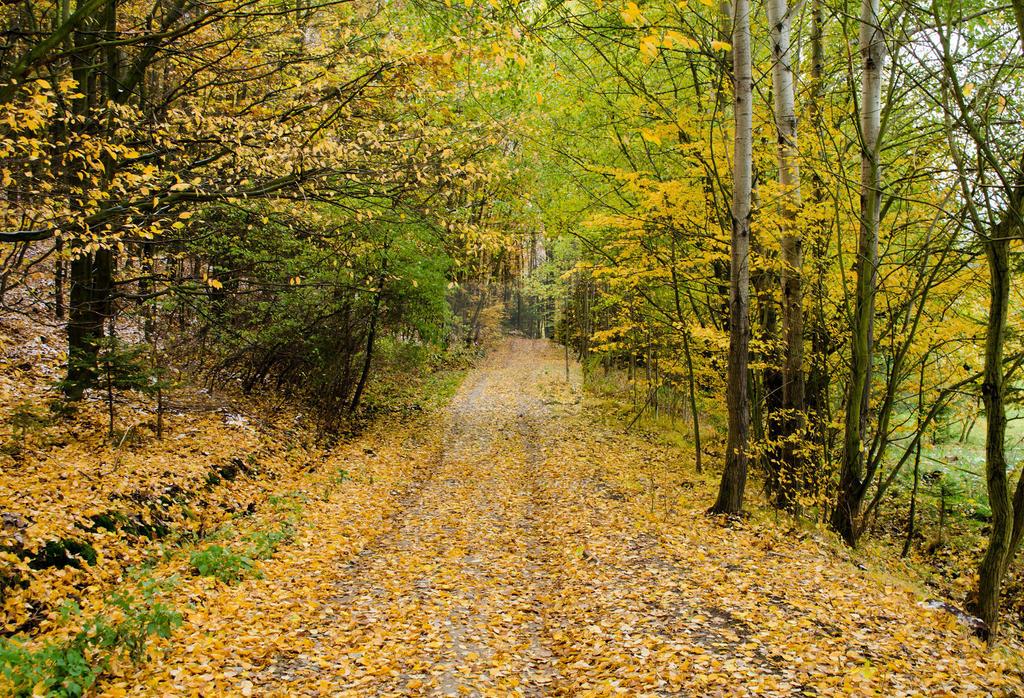 Autumn Forest Path by waynemountan