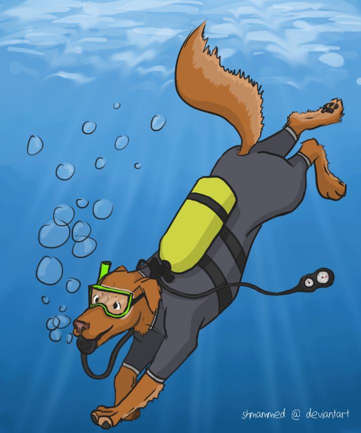scuba dog Gallery