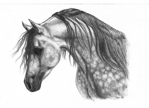 beautiful black horse running