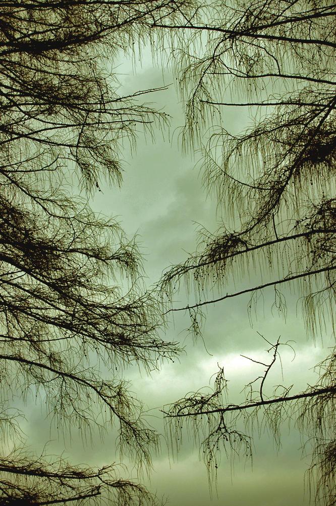 I'm like you tree by be-yoself