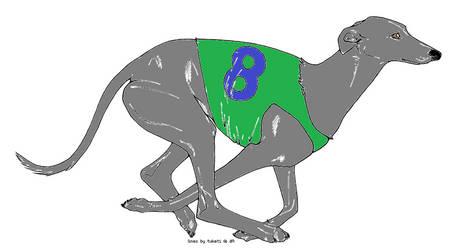Greyhound Adopt- OPEN