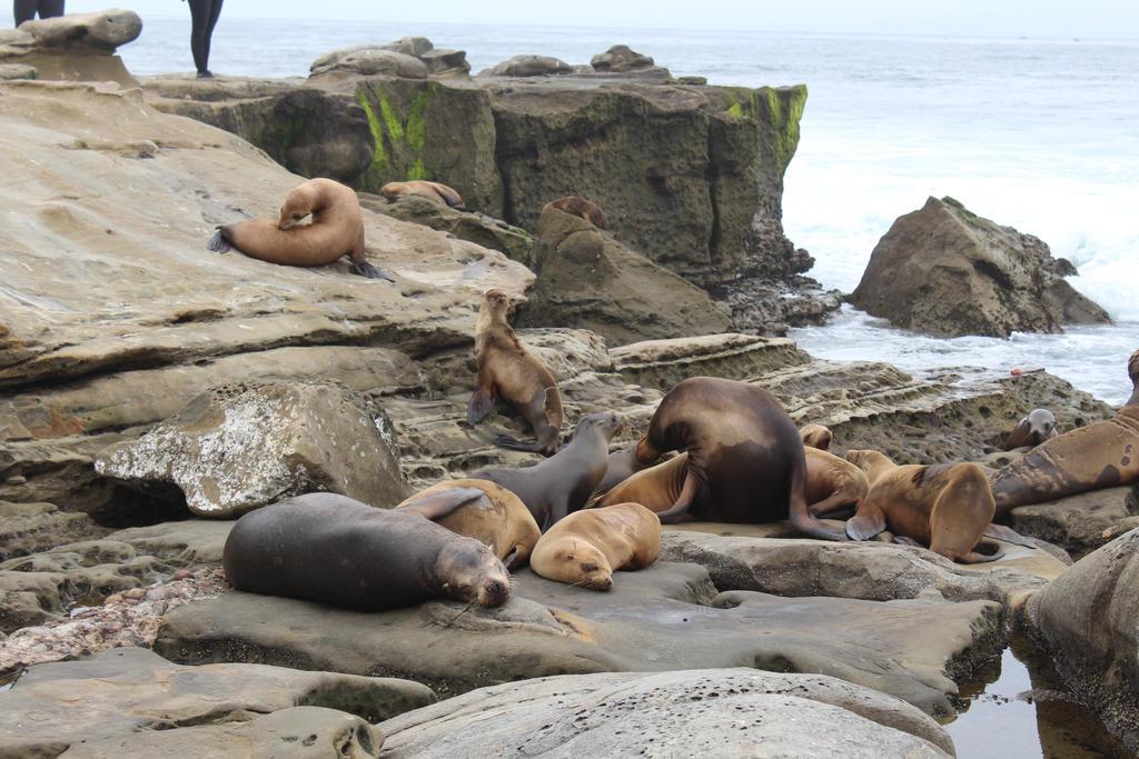 Cute Seals by StyxxsOmega
