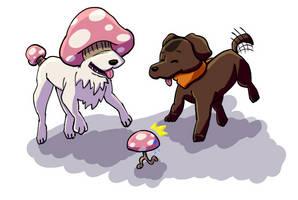 Dog friend?  Dog friend!