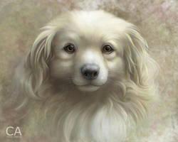 Golden Sky Dog