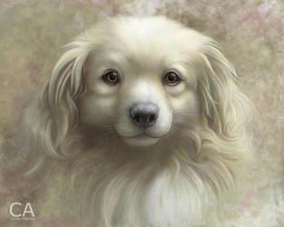 Golden Sky Dog by cameoanderson