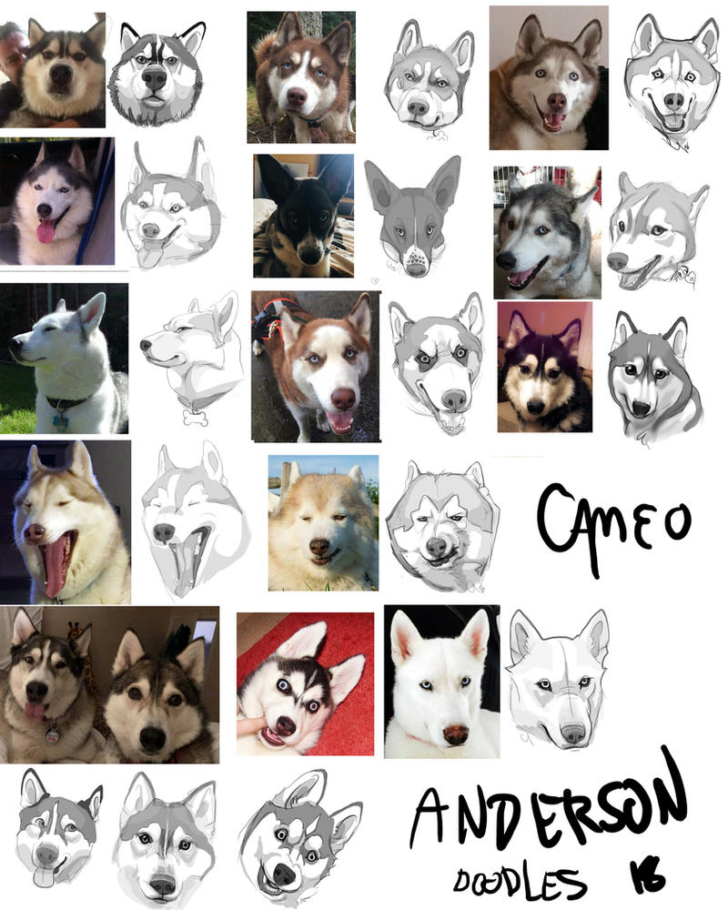 Animated Siberian Huskies by cameoanderson