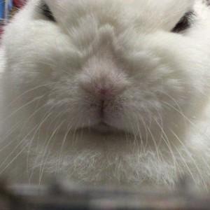 niivaley's Profile Picture