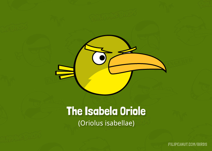 The Isabela Oriole by Filipeanuts