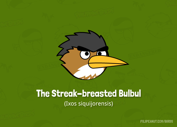 The Streak-breasted Bulbul by Filipeanuts