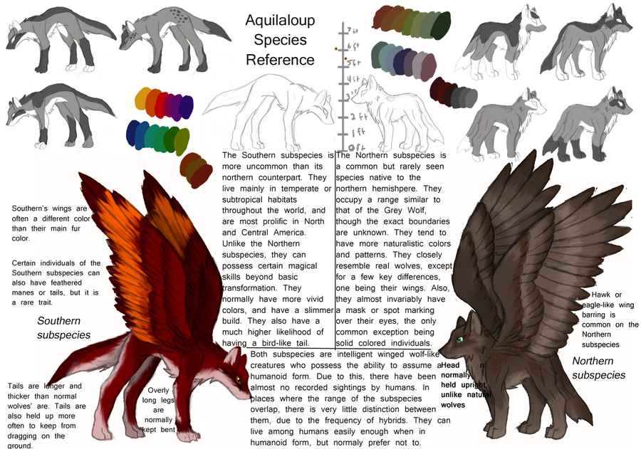 Aquilaloup winged wolf ref by argentalazuli
