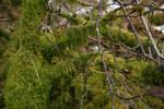 Mossy tree 2
