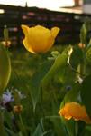 Summer flower by Ciuva