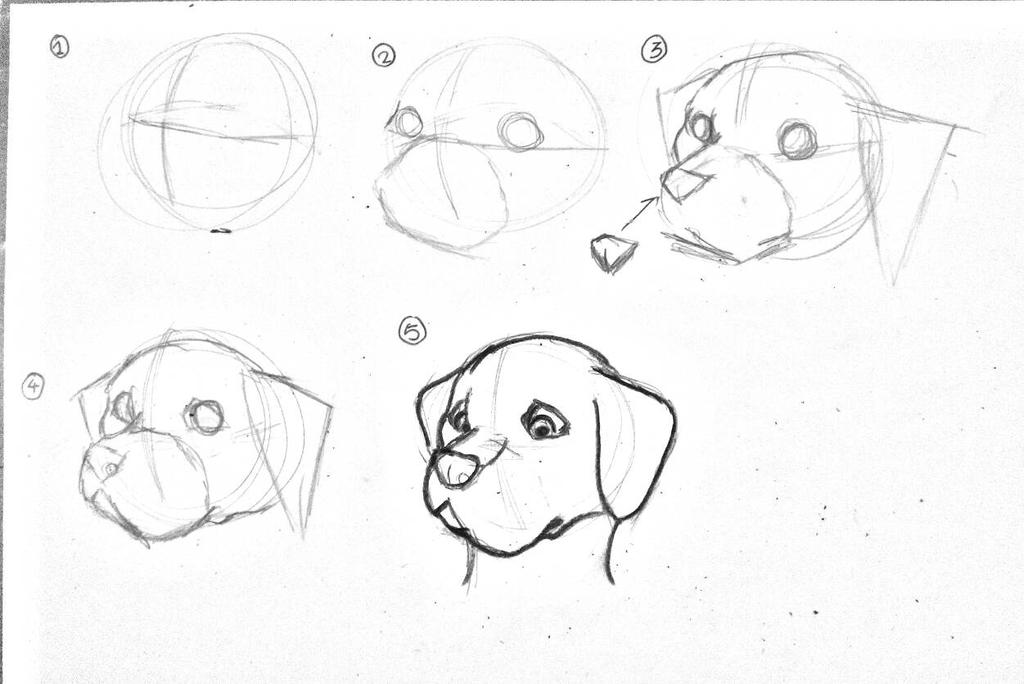 www how to draw a dog