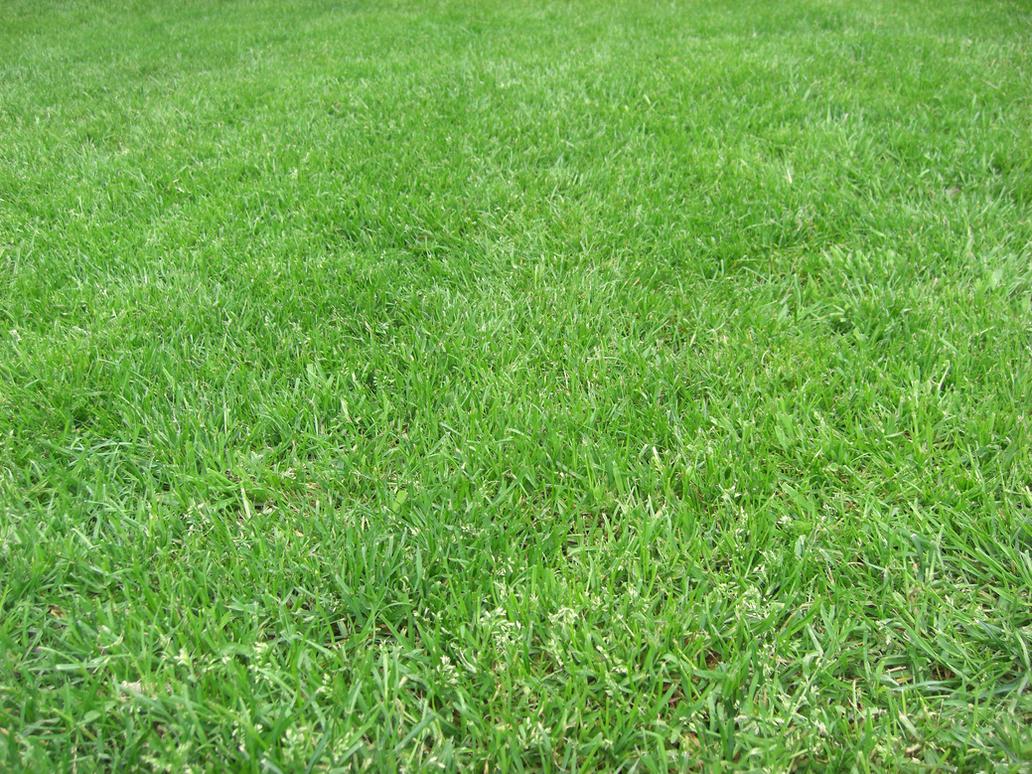 grass by xwattepoppl