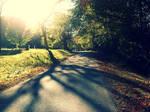 Peek-A-Through Sunshine