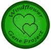 windflower_projectongoing_by_lisegathe-db7a7pd.png