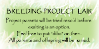 breedingprojectlair_by_lisegathe-dbjtjcl.png