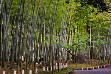 Bamboo Forest by taeliac