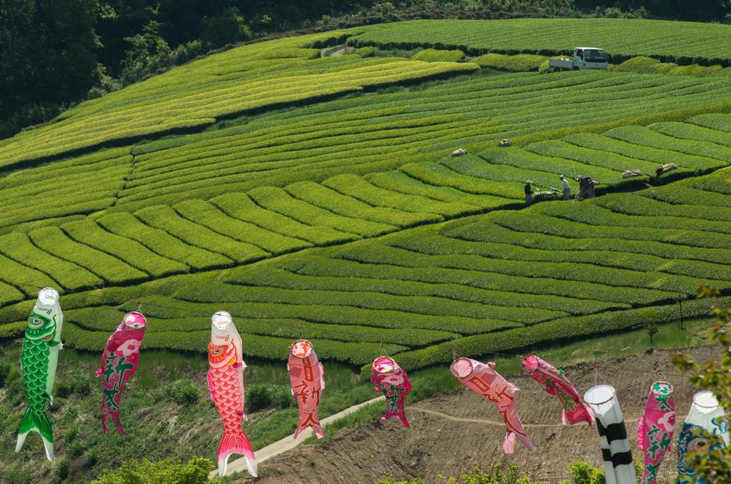 Tea Fields by taeliac