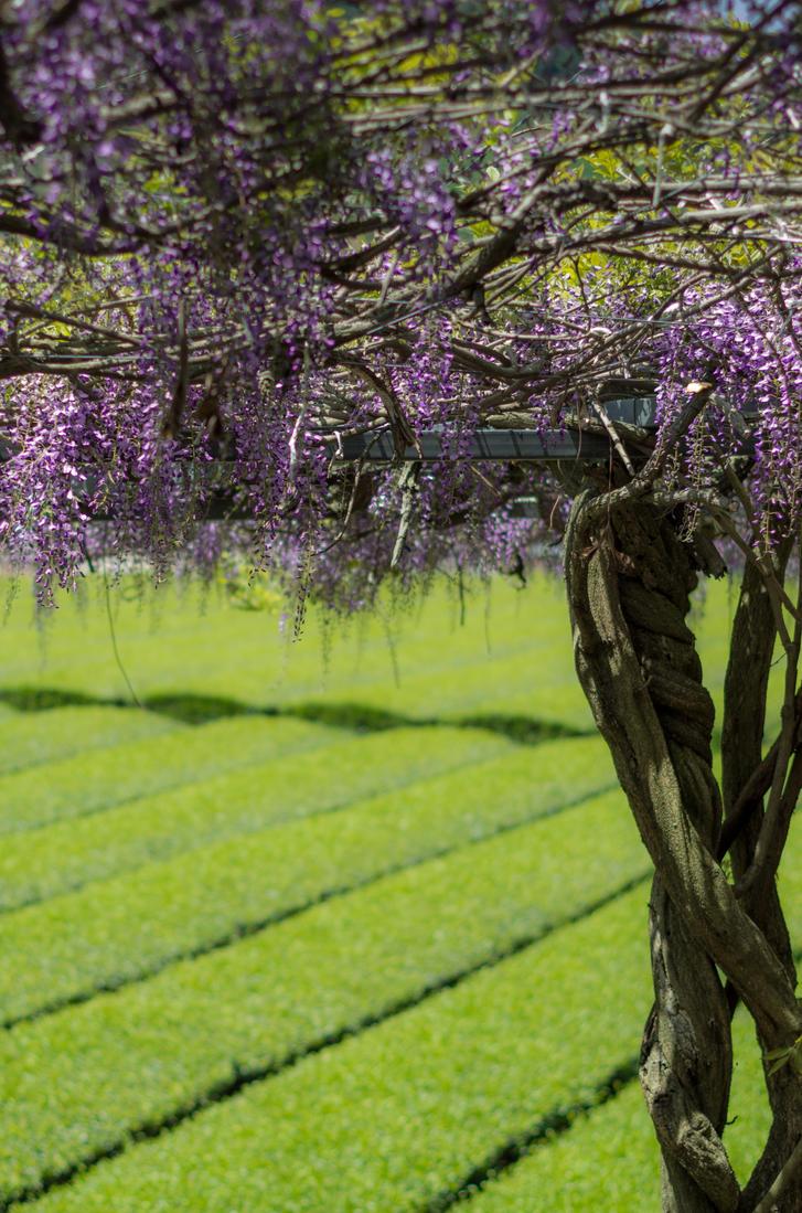 Tea and Flowers by taeliac