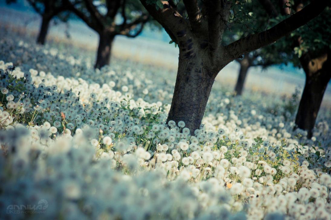 meer aus pusteblumen by AnnikaLikes