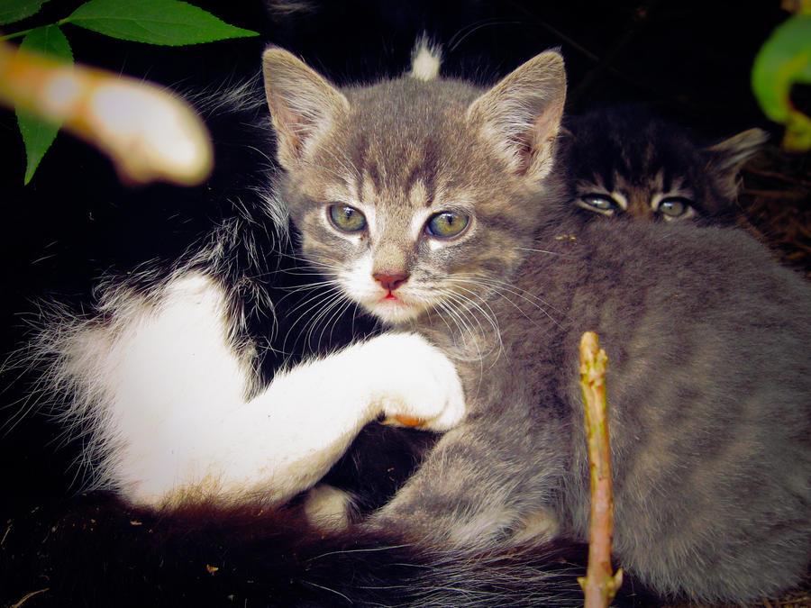 Kittens by sallymalene