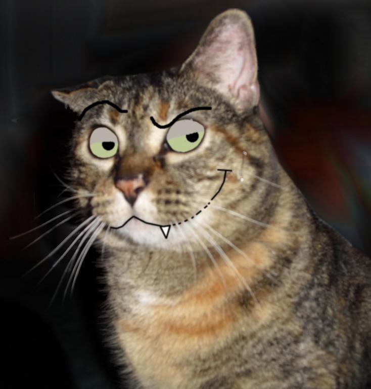 Evil Cat Pictures 100