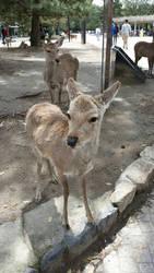 Deer 3 by SquishyKurage