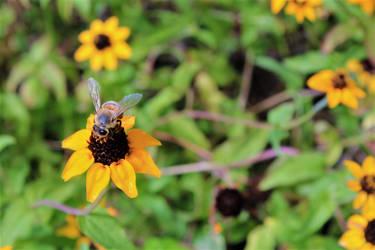 Bee lives matter  by SquishyKurage