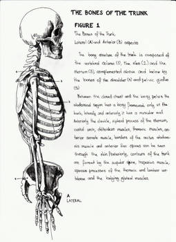 The Bones Of The Trunk - 01