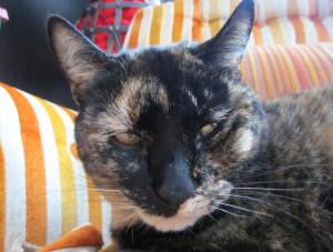 Criddlebee's Profile Picture