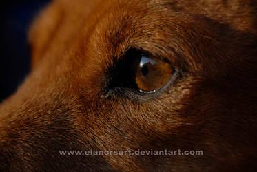 Clear eyes by elanorsart