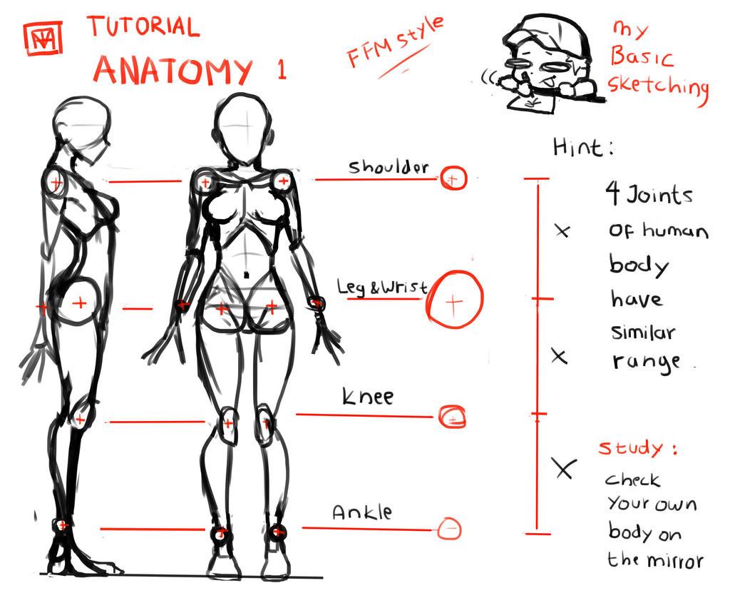 Anatomy tutorial part.1:Basic bone structure by FlyingFish-Mat on ...