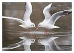 Gull Lake on Ice