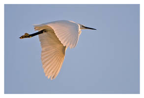 Flight of the Egret by Neutron2K