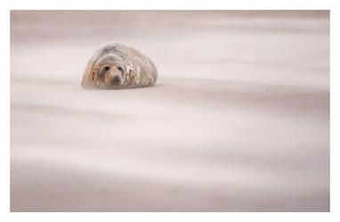 Through the Sand Storm by Neutron2K