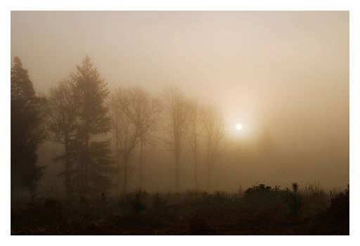 Mist In The New Forest