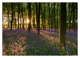 Micheldever Woods by Neutron2K