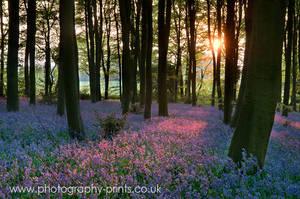 Bluebell Sunset by Neutron2K
