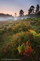 Morning Mist over Bratley Wood by Neutron2K