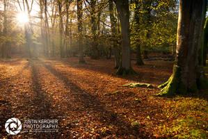 Through the Trees by Neutron2K