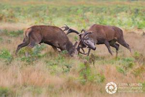 Rutting Red Deer by Neutron2K