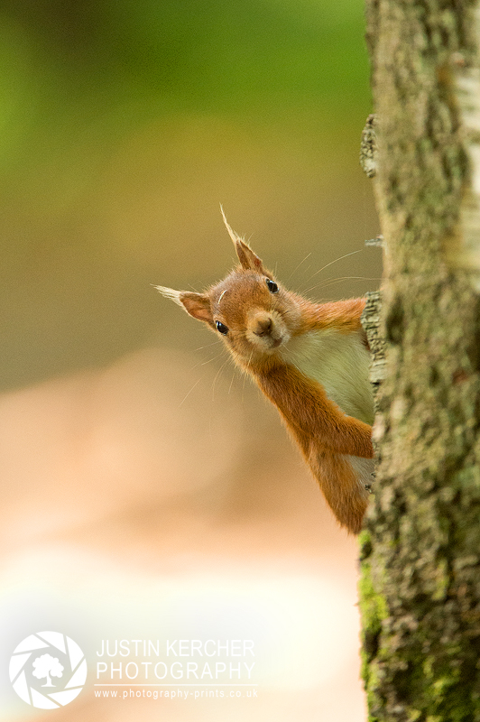Peek a Boo by Neutron2K