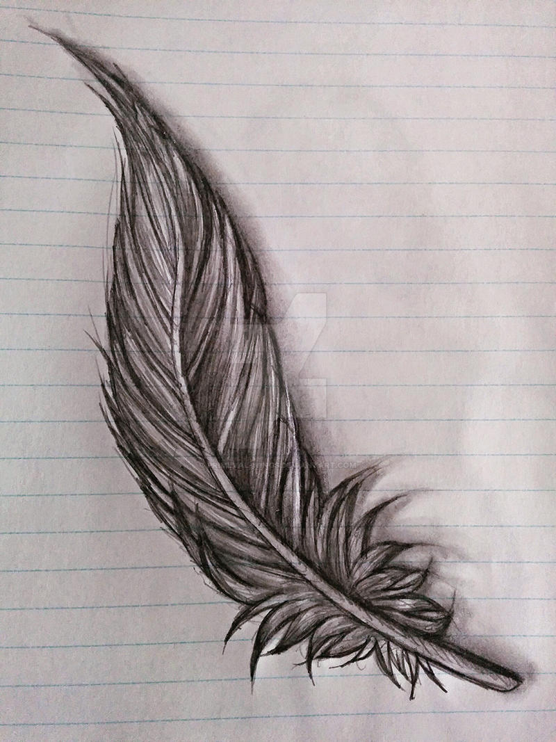 feather sketch by primeval wings watch traditional art drawings ...