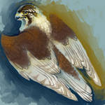 The falcon Goddess TasuketeMegami