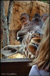 Giraffe and friend by Gary-Melton
