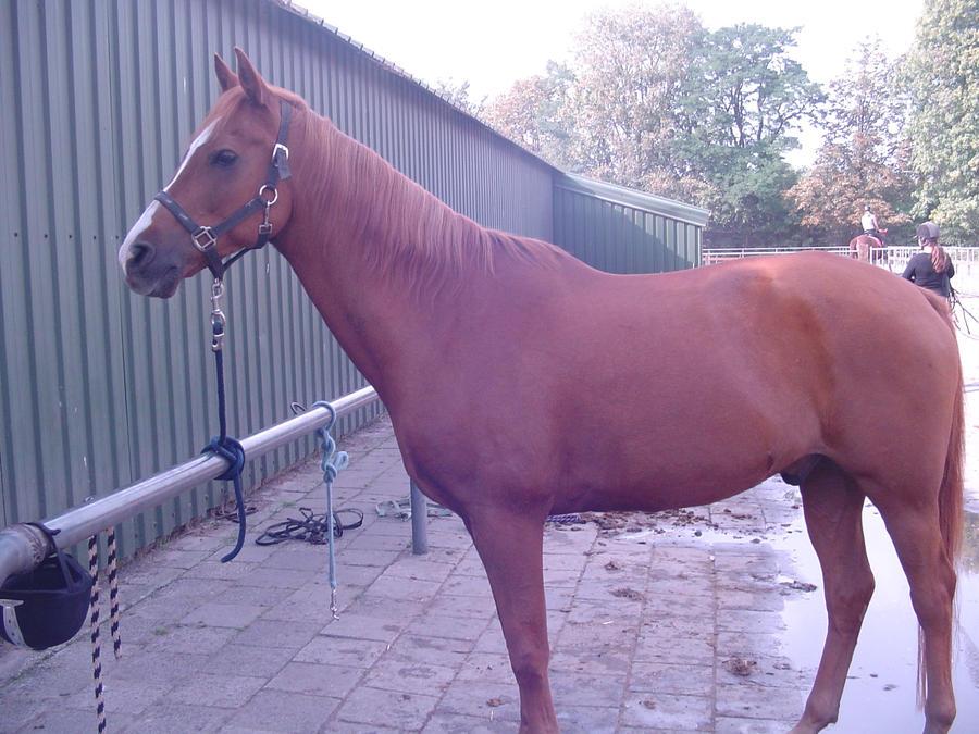 my hors